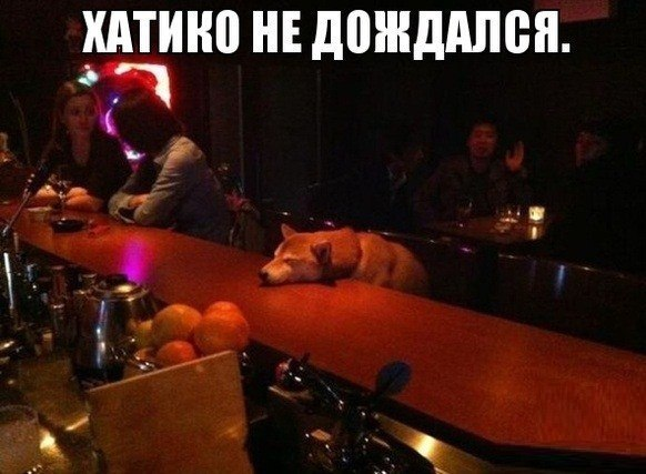 собаки_улыбаки_ (2)