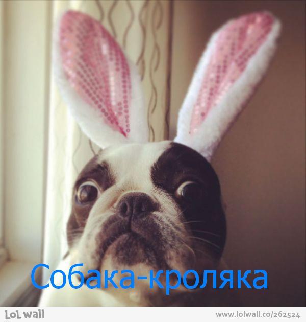 собаки_улыбаки_ (3)