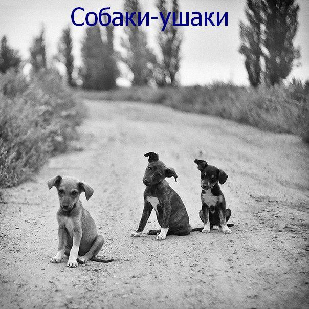 собаки_улыбаки_ (7)