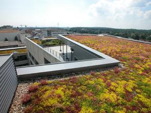 Зеленая крыша 2