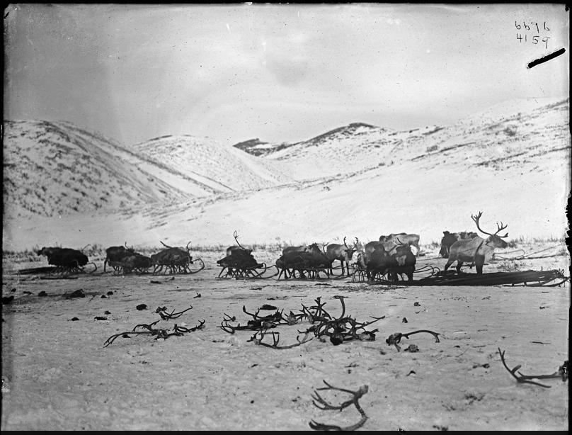 корякский санный поезд 1901 г.