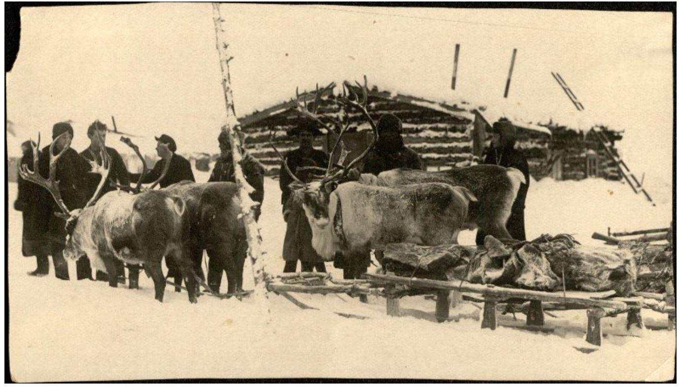 Вывоз золота на нартах Колыма ЮГПУ 1935 г..JPG