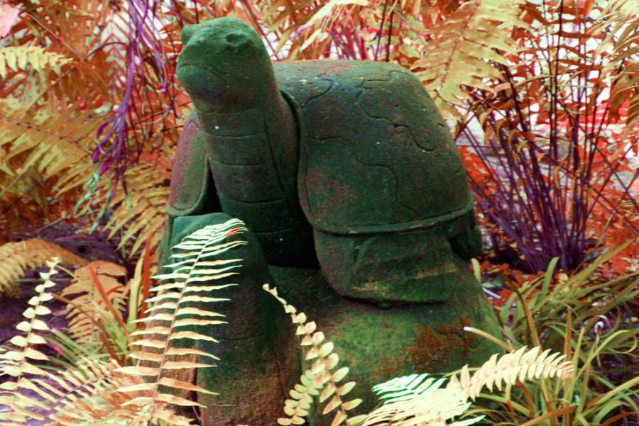 stone_turtle.jpg