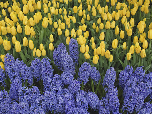желто-синие цветы хуже приговора