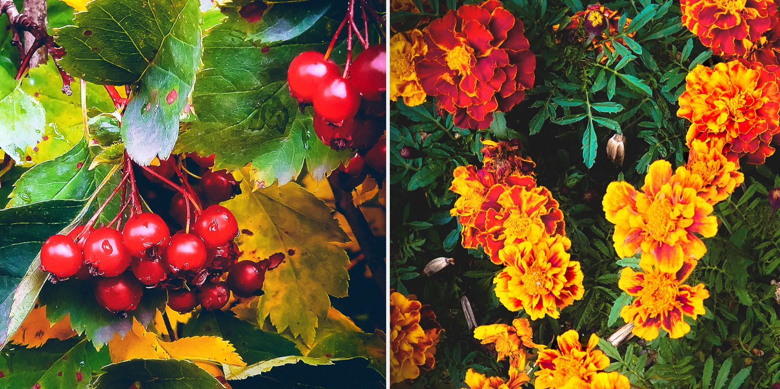 Неожиданно. Каски осени: красный - жёлтый - зелёный = страсть - оптимизм -