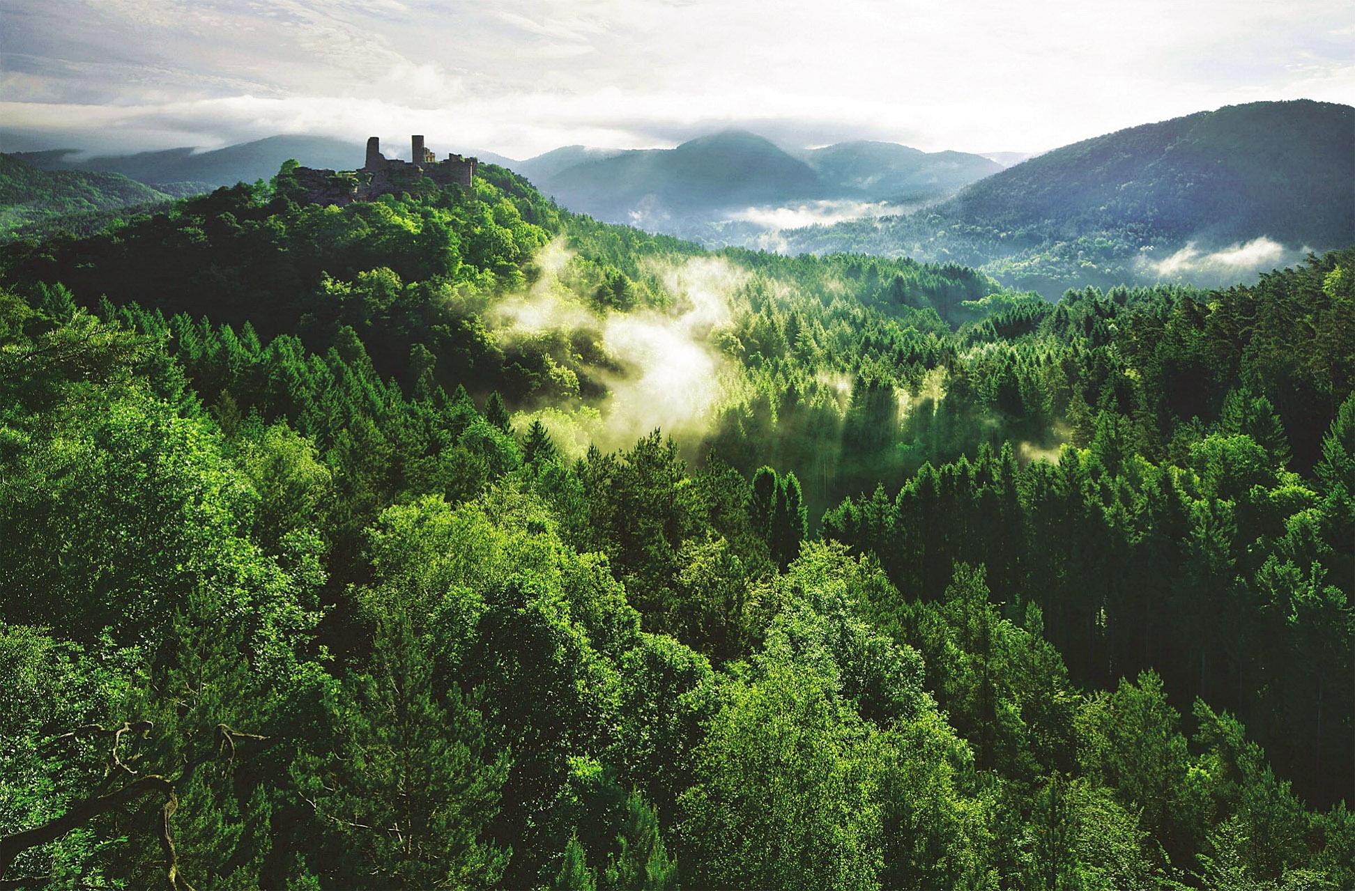 Pfalzer Wald by Kilian Schonberger.jpg