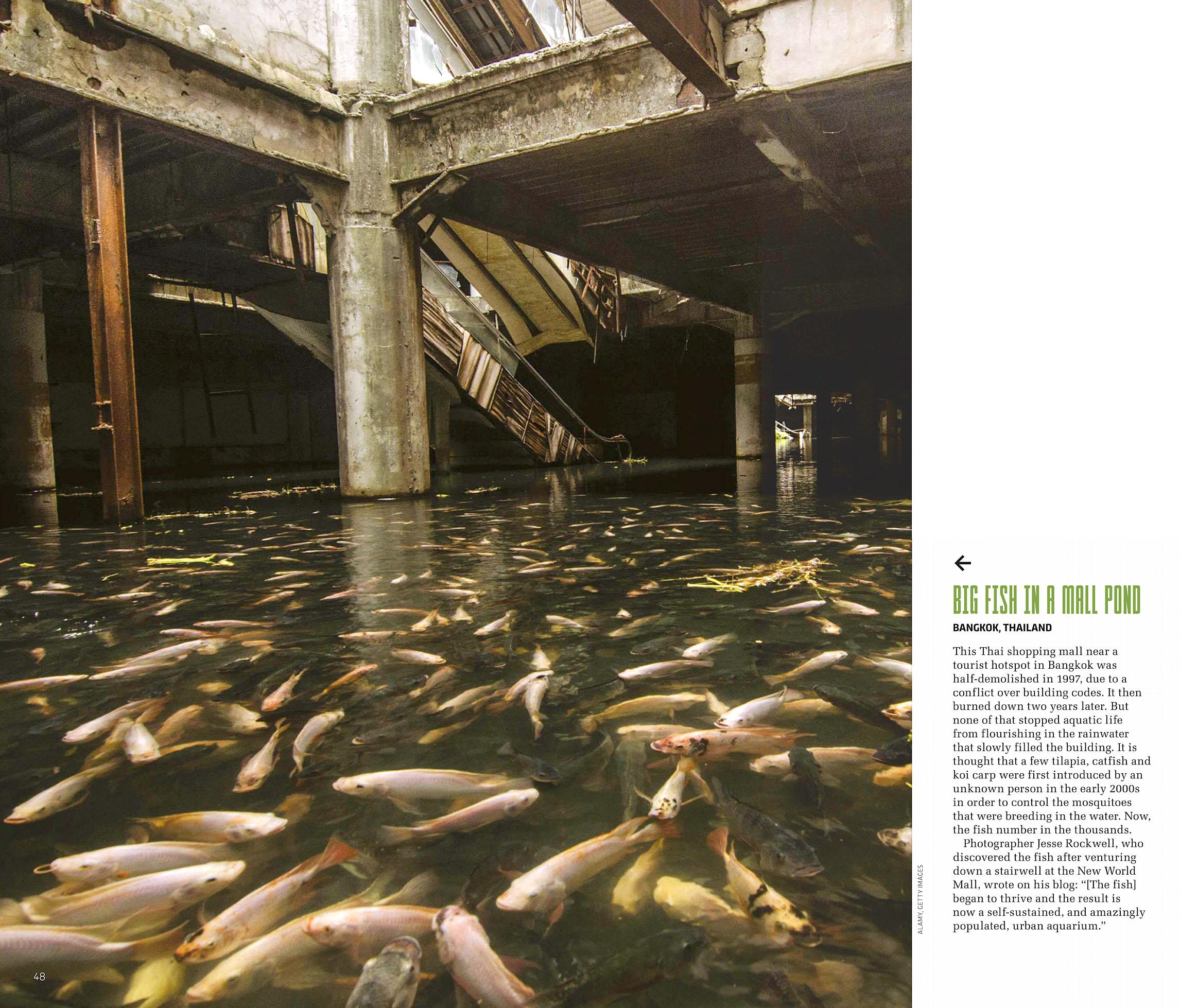 Science Focus 2020-05 Bangkok.jpg
