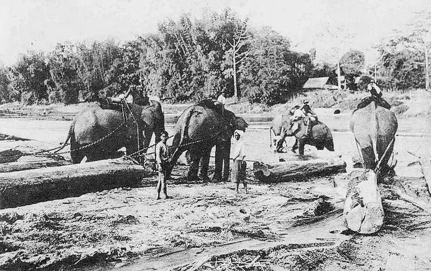 1889 Logging teak outside of Chiang Rai.jpg