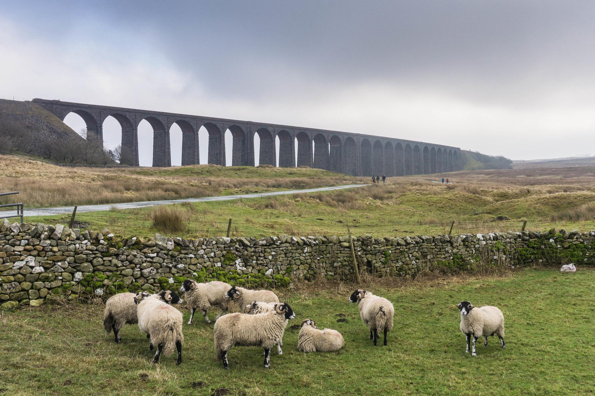 Ribblehead Viaduct, Yorkshire by Matt Doran.jpg