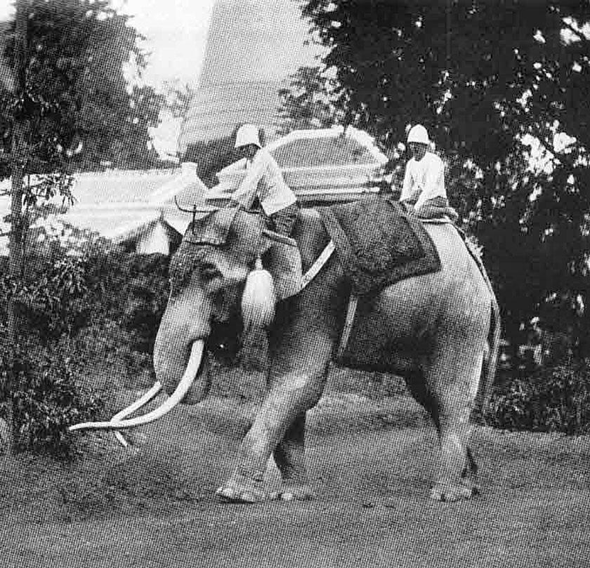 1898 A Royal white elephant.jpg
