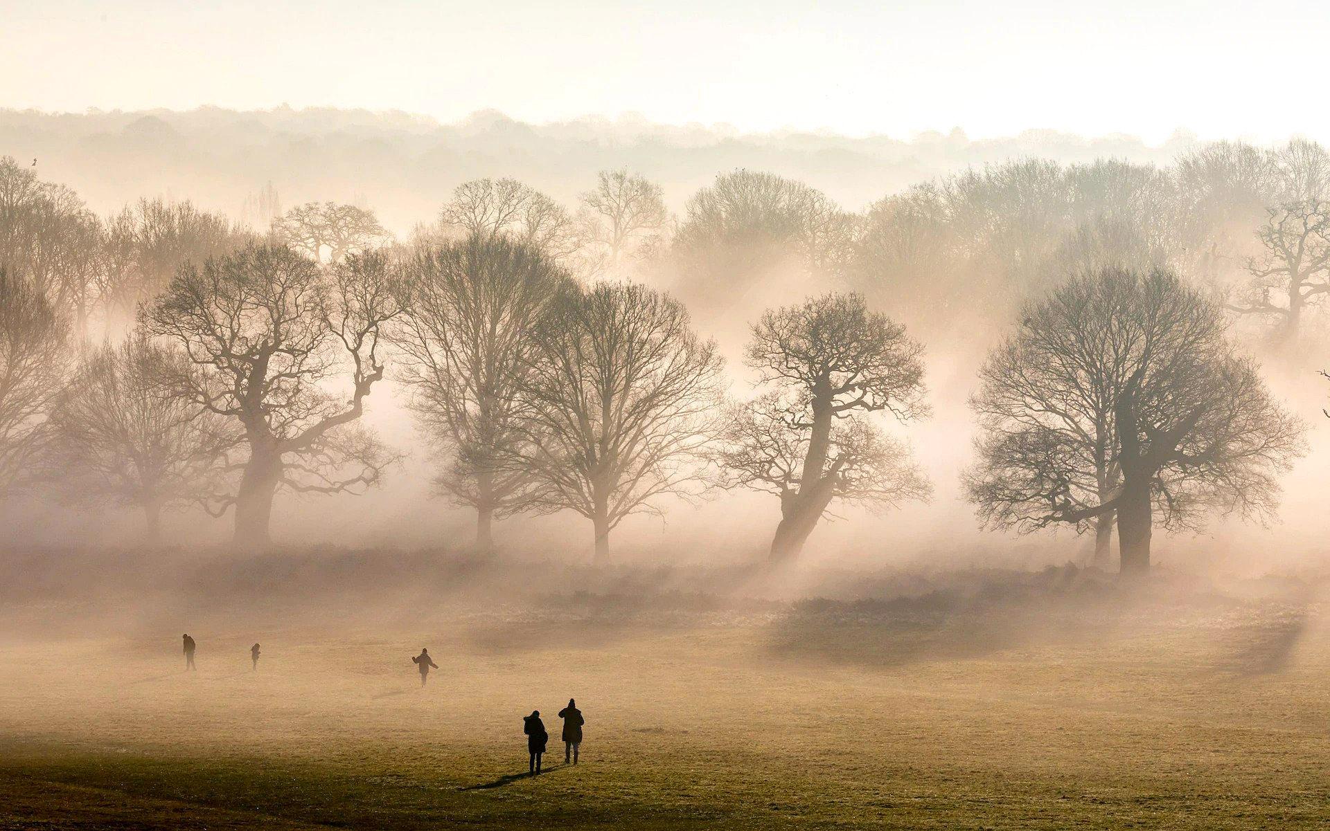 Richmond Park, London 2 by Alex Lentati.jpg