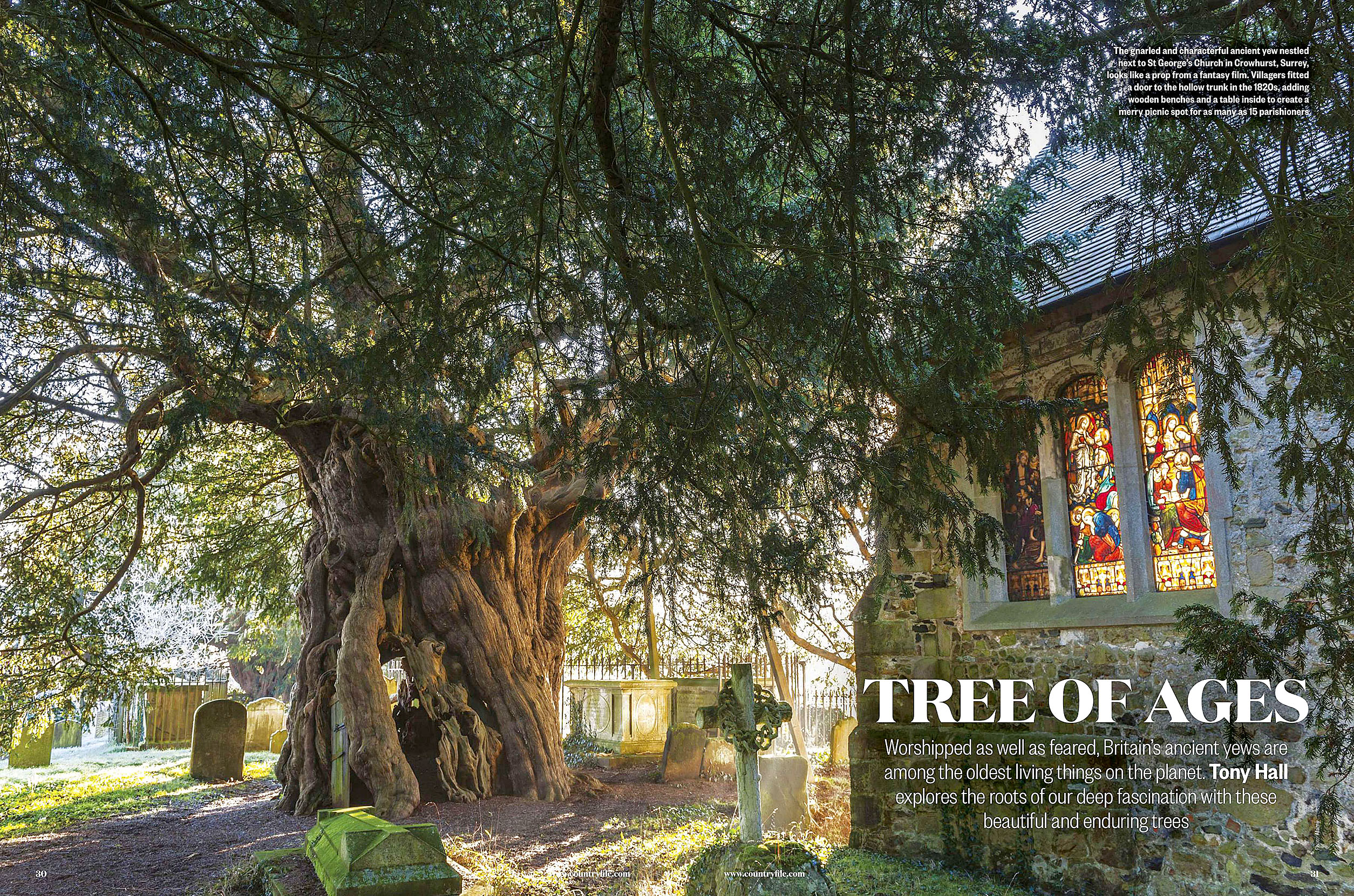 BBC Countryfile 2020-01 Trees 01.jpg