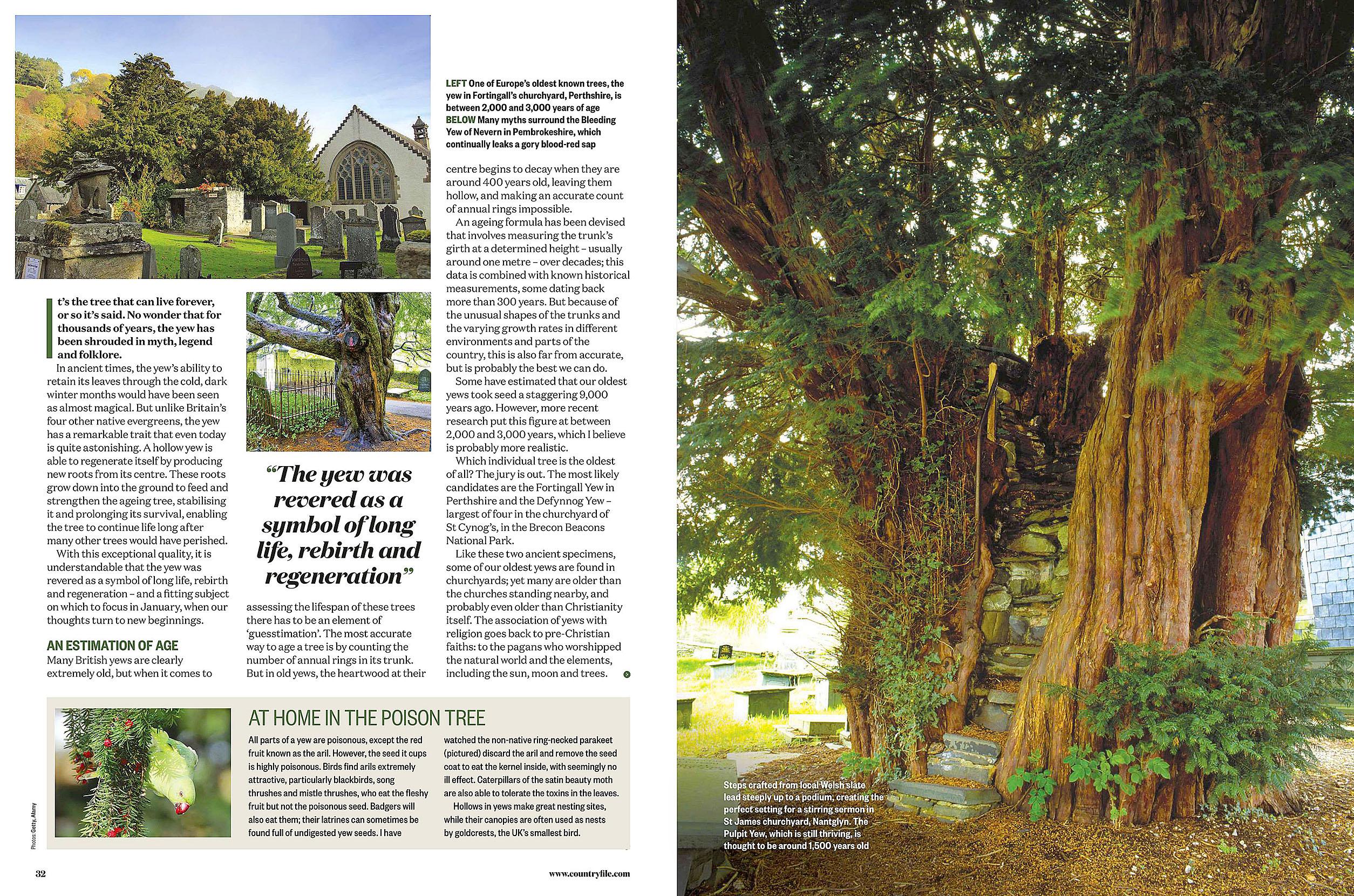 BBC Countryfile 2020-01 Trees 02.jpg