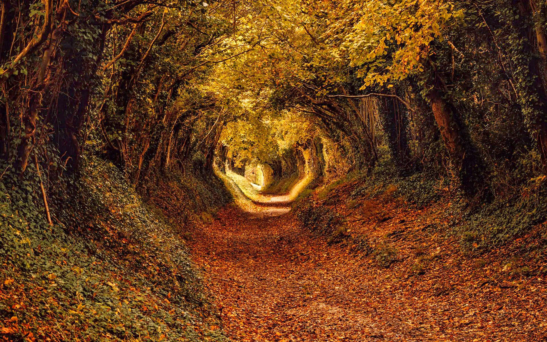Autumn colours at Halnaker Wood, West Sussex by Matt Pinner.jpg