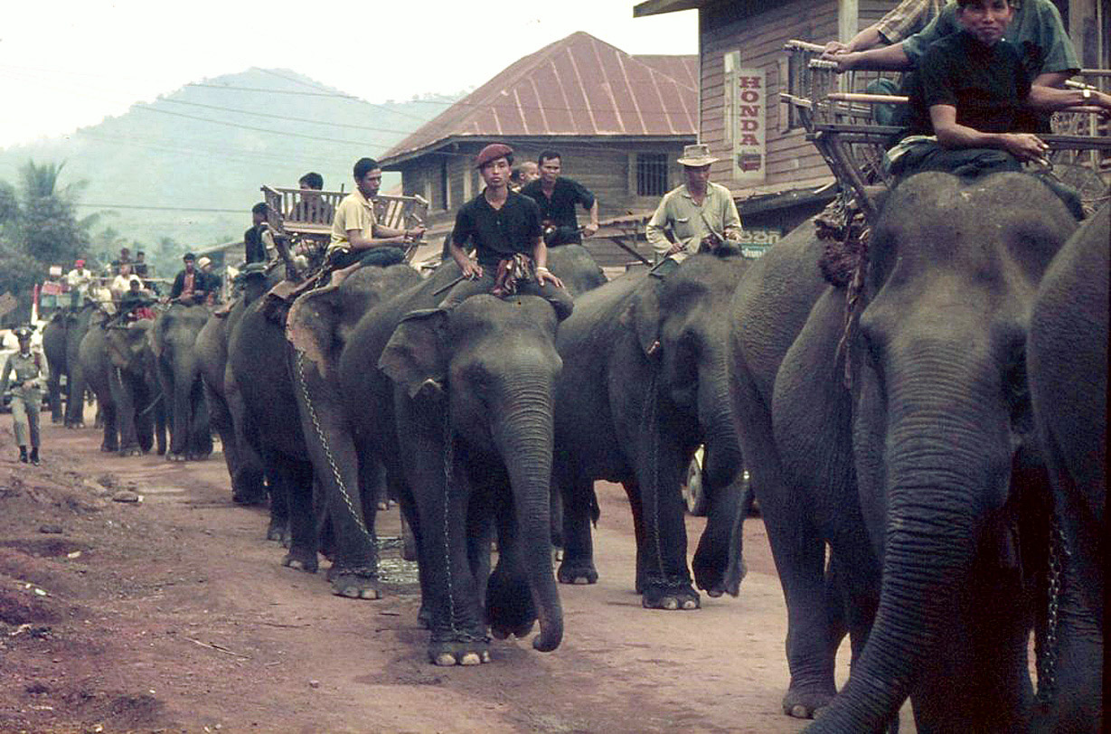 1965 Leading elephants in Loei for the annual Elephant Round-Up.jpg