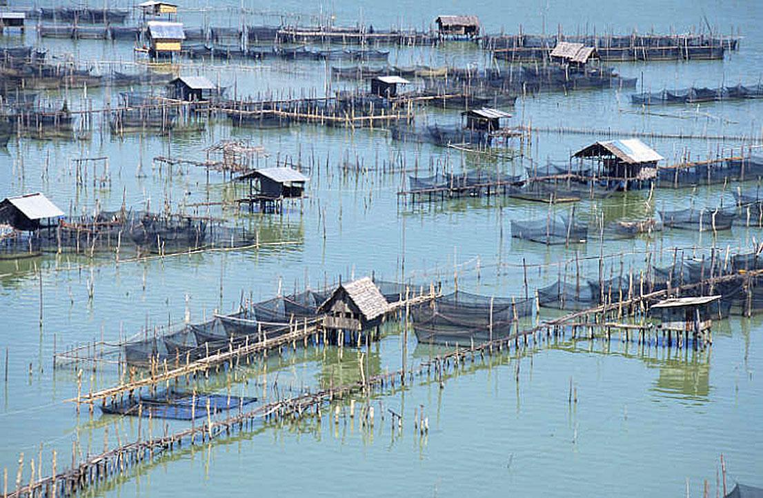 Fresh Water Fish Farm in Songkla.JPG