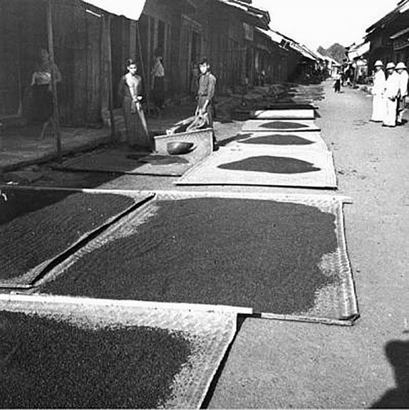 1953 Drying black pepper on bamboo mats, Baan Tamai, Chantaburi Province.jpg