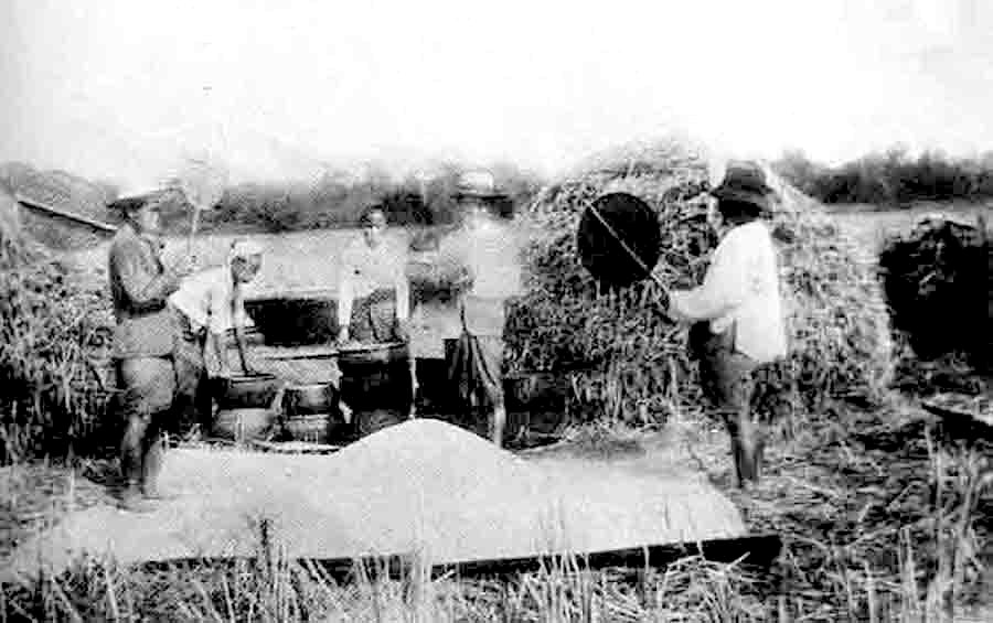 Old school northern rice harvest.jpg