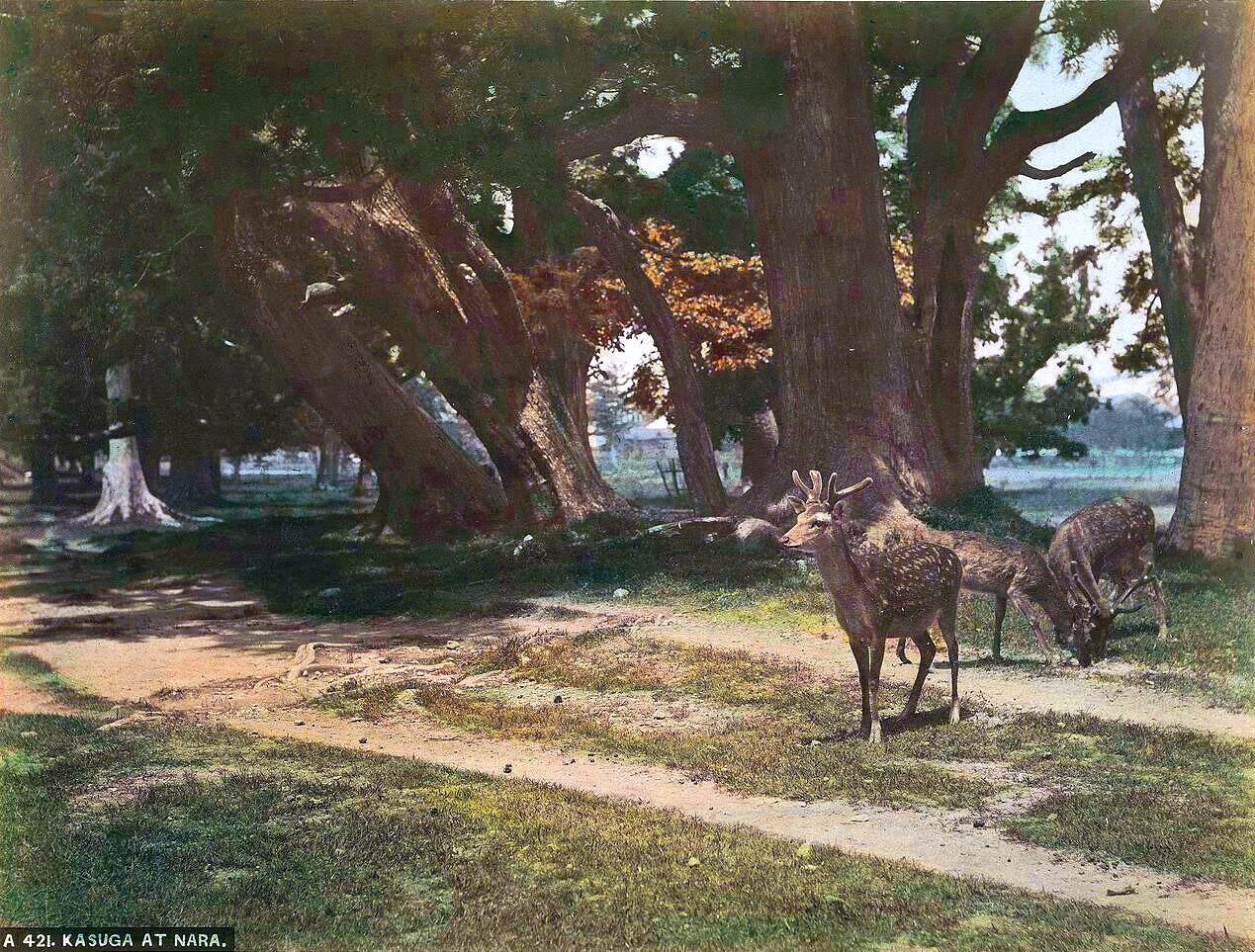 1870 Kasuga at Nara.jpg