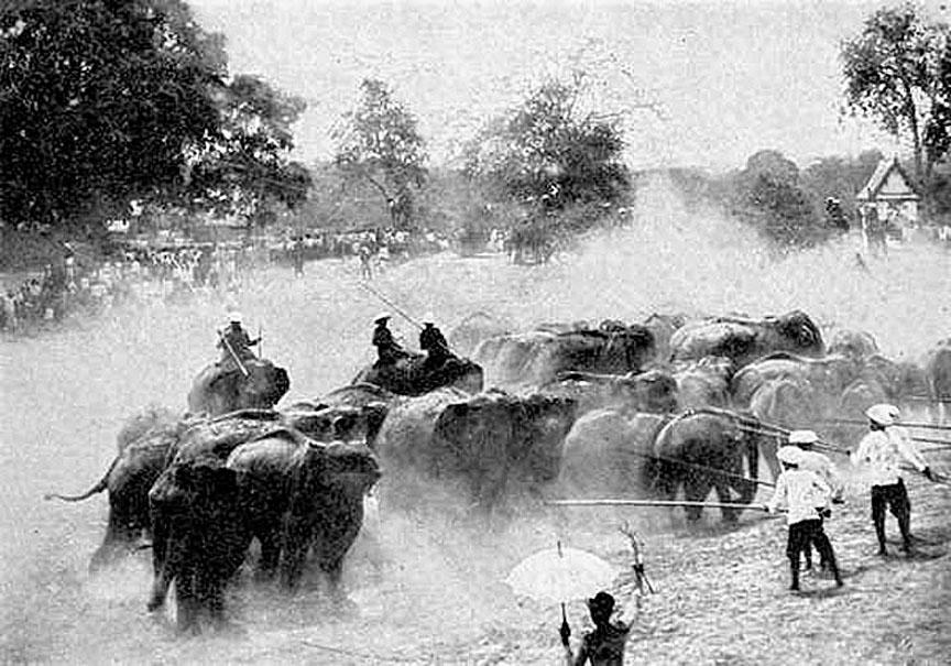 1913 Traditional royal herding & corraling of wild elephants, Ayuttaya.jpg