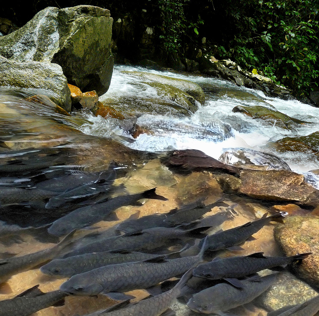 The Namtok Phliu National Park 2.jpg