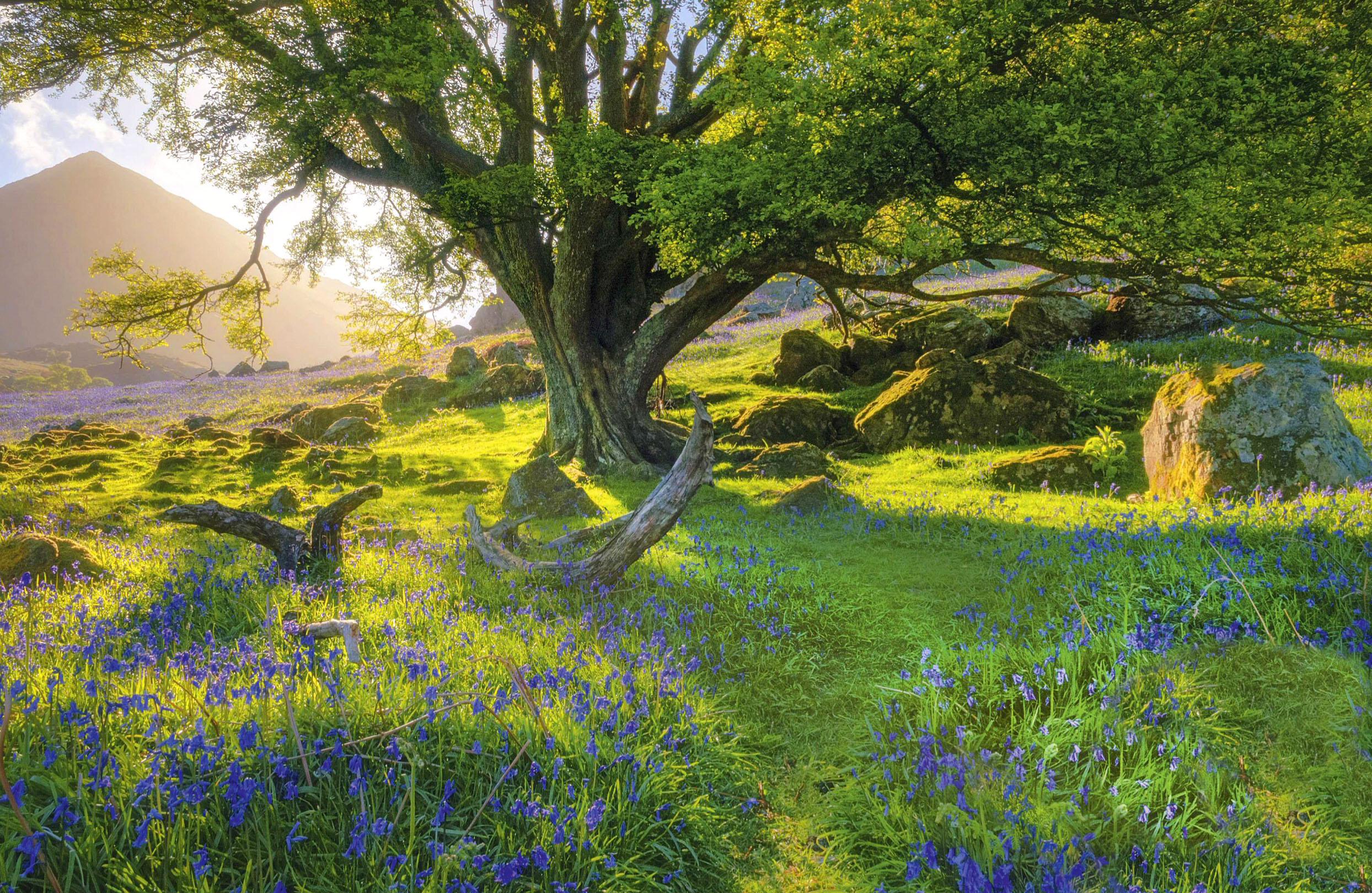Rannerdale, Lake District.jpg
