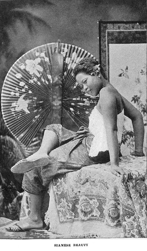 1895 Siamese Beauty.jpg