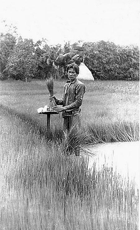 1912 Rice blessing, Petchaburi.jpg