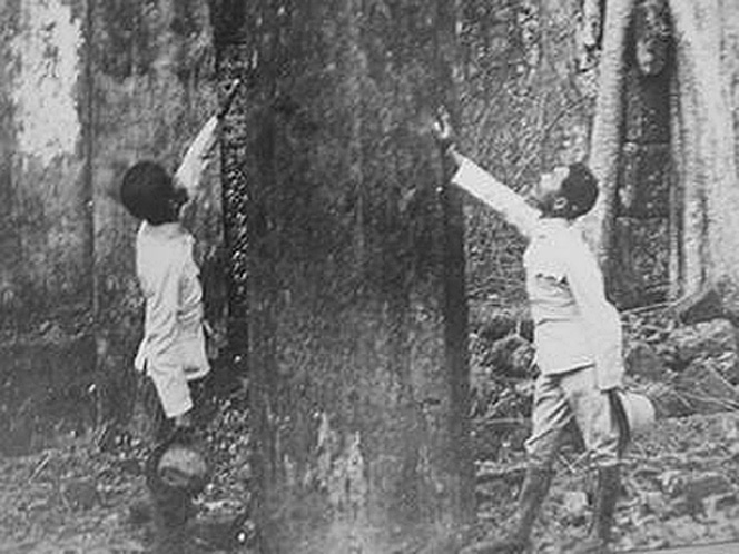 1895 Chiang Rai officials seize the moment, northern forests.jpg