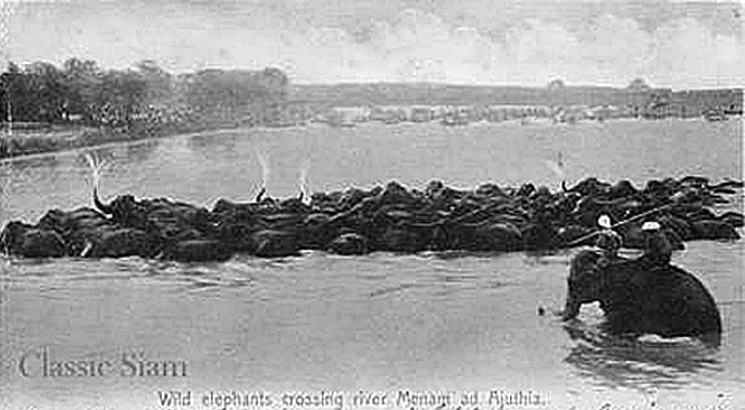 1904 elephant round-up.jpg