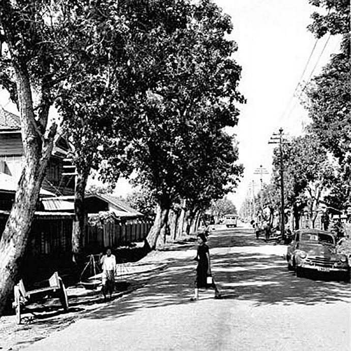 1952 Life along mahogany-lined Nakorn Chaisi Road, Dusit.jpg