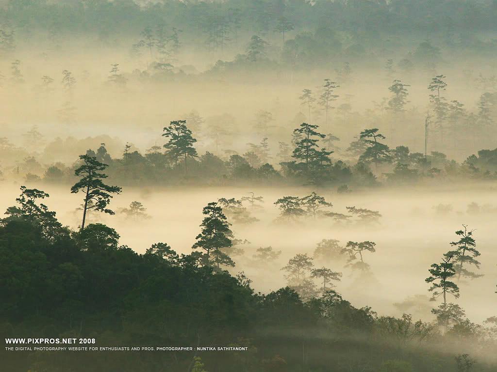 Scenic Thai 124.jpg