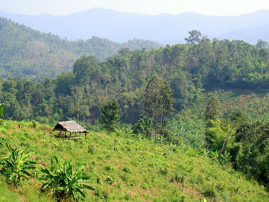 The Hills of Chiang Mai.jpg