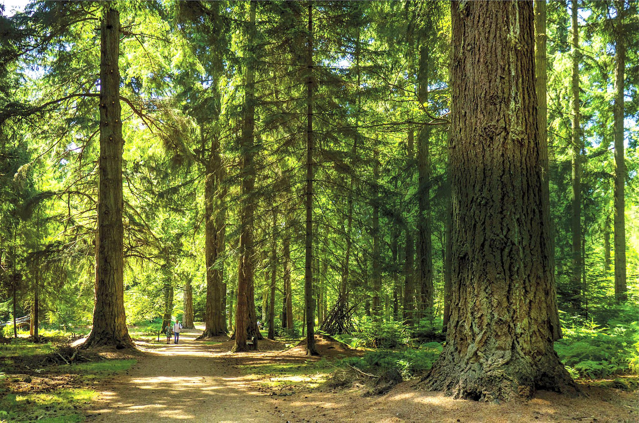 New Forest National Park, Blackwater.jpg