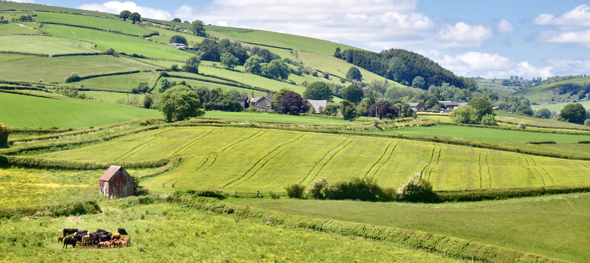 View from Clun Castle Shropshire by Christopher Price.jpg