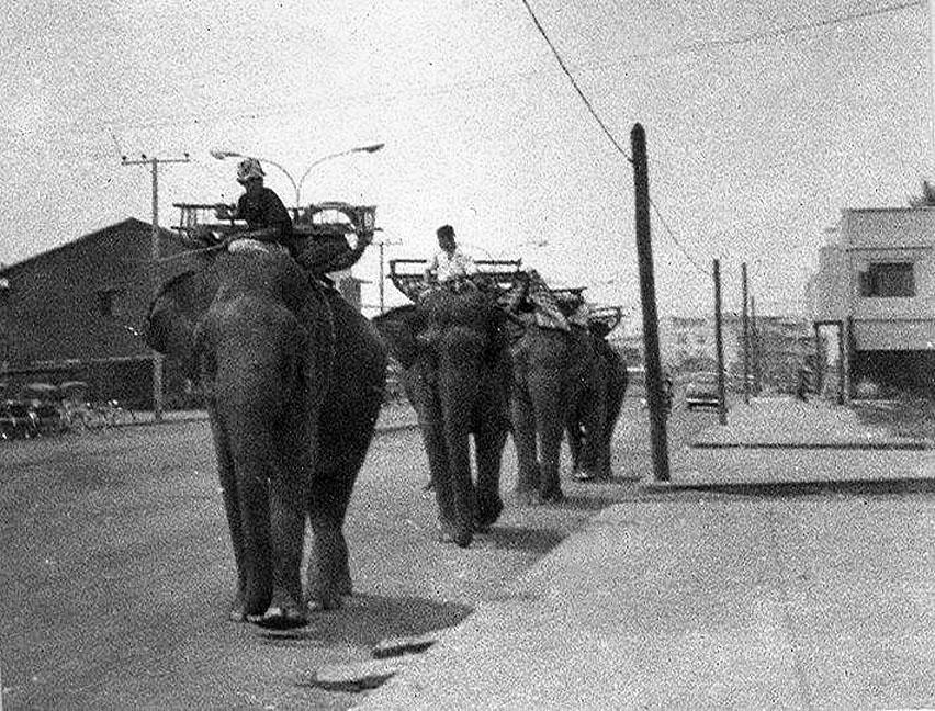 1970 Loei Elephants on main street.jpg