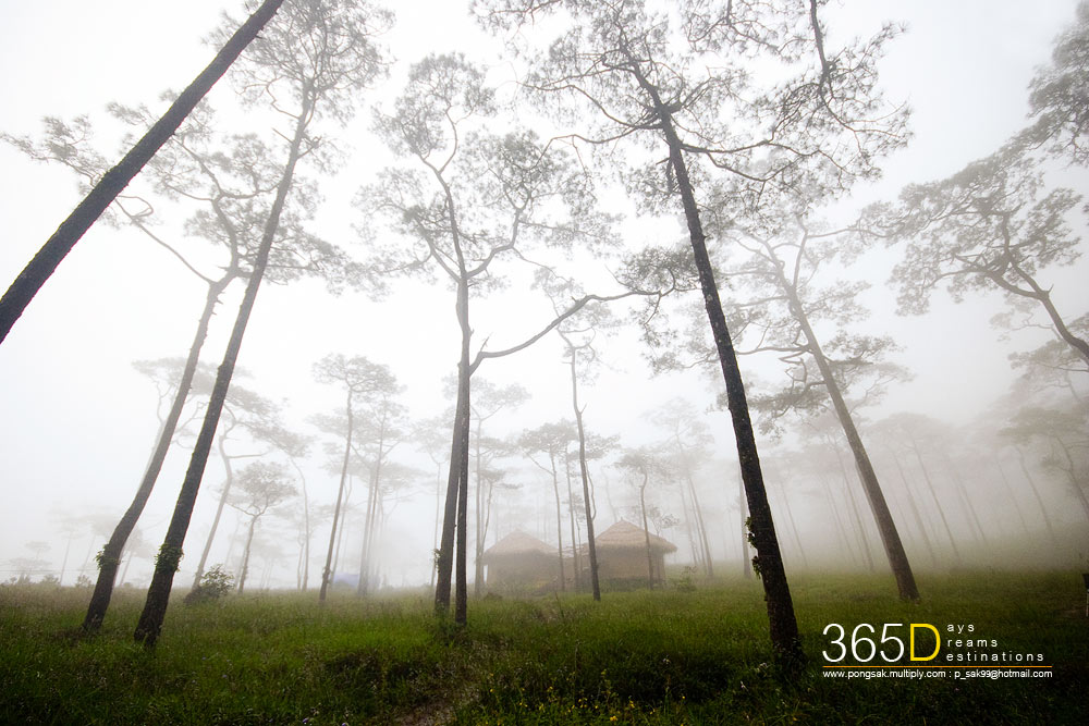 Scenic Thai 74.jpg