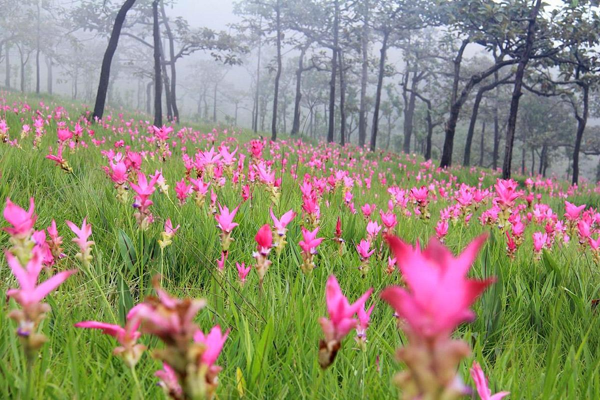Pa Hin Ngam National Park Chaiyaphum 1.jpg