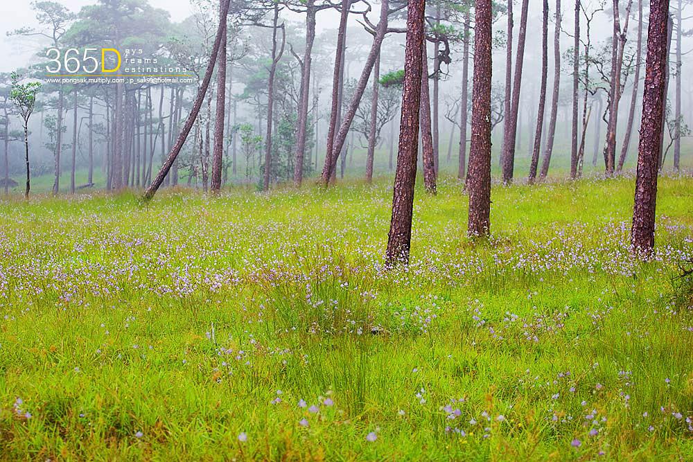 Scenic Thai 58.jpg