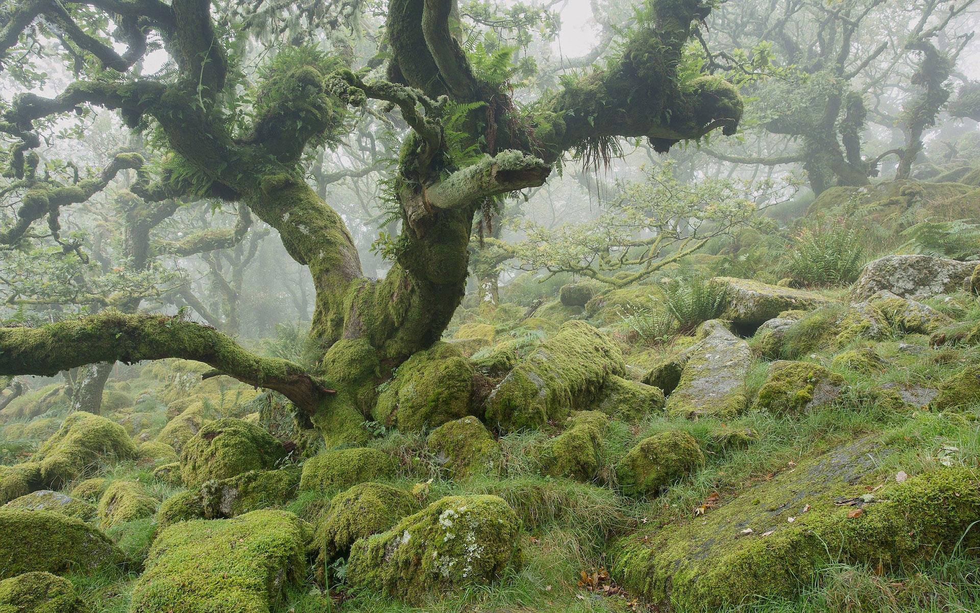 Wistman's Wood, Dartmoor National Park by Anna Curnow.jpg