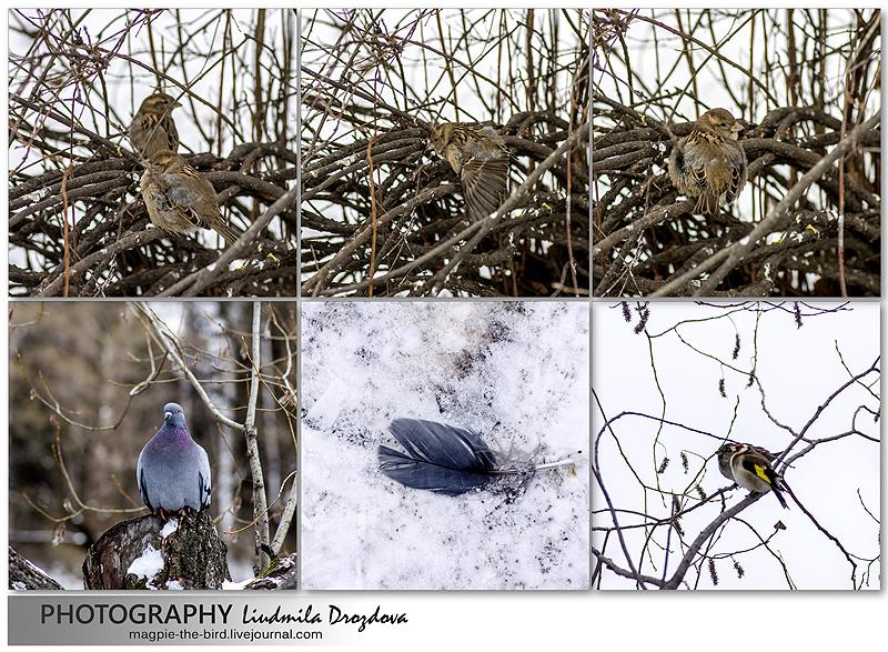Птичкам-холодно