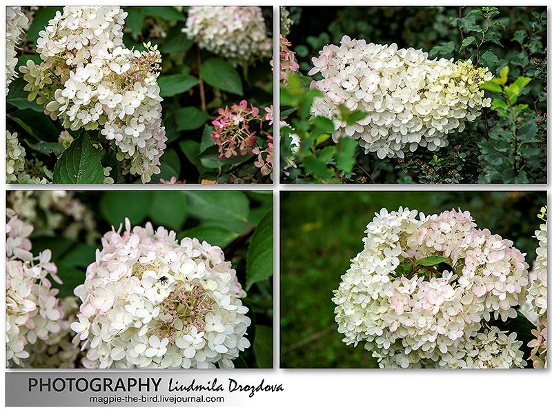 Непонятные-цветы