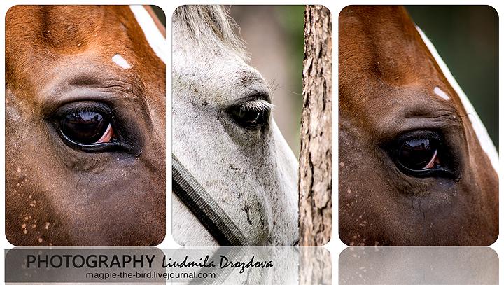 Глаза-лошадей