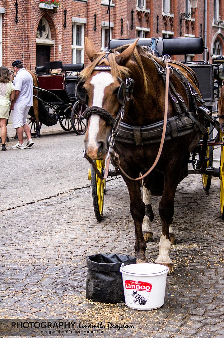 Лошадиный-фонтан-в-Брюгге 5