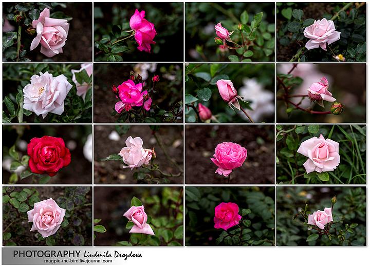 Цветочки-14.09.2013