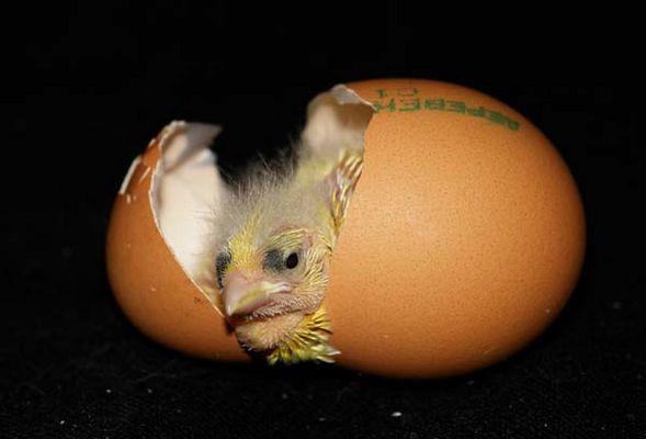 Фото как яйцо развивается