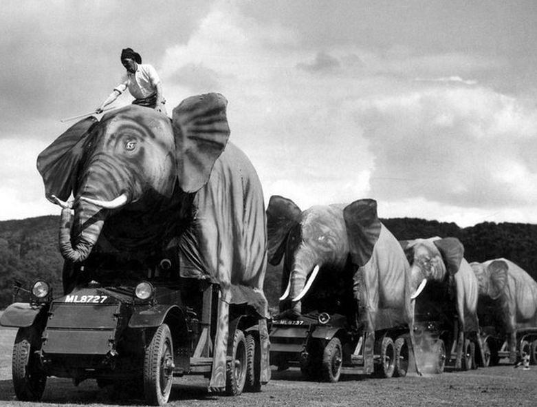 """""""Слоны"""" в Индии или Англии?"""