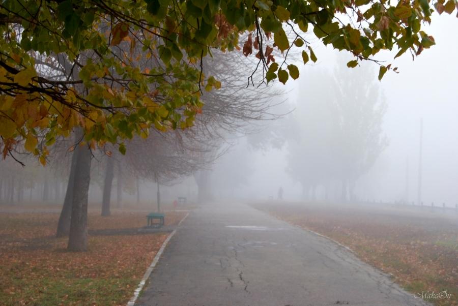 Картинки туман для детей детского сада