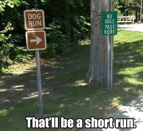 aba38945d03f47a0777146a4fccc211a--short-dog-dog-runs
