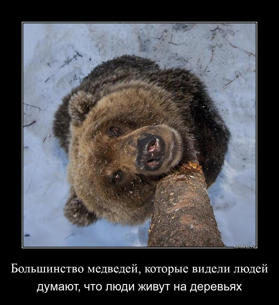 1576568662_demki-1